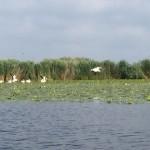 Im Donaudelta unterwegs