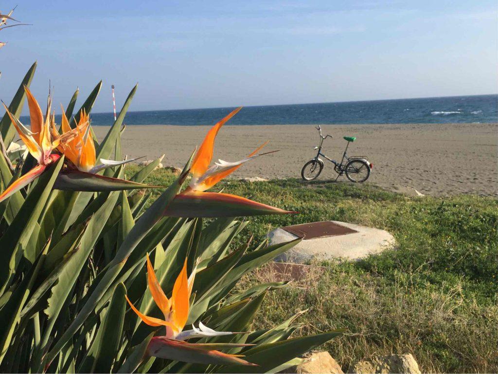 Mifa am Strand